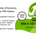 Growers can access this information via a free call to 888-4 VEG IPM (888-483-4476).