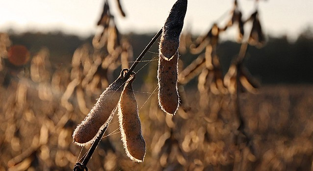 Settlement talks fail in soybean seed lawsuit