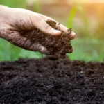 soil health garden gardening (U.S. Department of Agriculture, Public Domain)