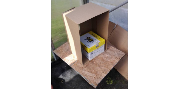This commercial bumble bee colony is deployed in a greenhouse in Saginaw, Michigan. They will last up to 12 weeks and require minimal management except for being placed off the ground and shaded. Inside each colony is a pre-packaged sugar water source to keep bees fed when flowers are unavailable or when sprays are applied, but be proactive about closing the entrance before spraying insecticides. (Photo by Ben Phillips, MSU Extension)
