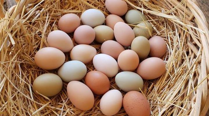 How Long Do Ens Lay Eggs