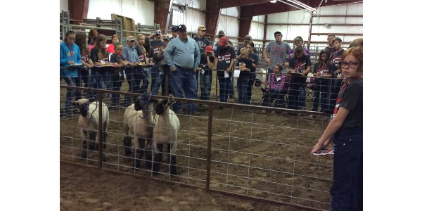 Dr. Doug Smith explains sheep judging at the Standard of Excellence Livestock Judging Camp at NCTA. (File Photo)