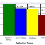 Figure 1. Soybean yield due to delayed burndown herbicide applications. Burndown applications were made seven days prior to planting at unifoliate to V1 (1-trifoliate) soybean and V3 (3-trifoliate) soybean. (Courtesy of MSU Extension)