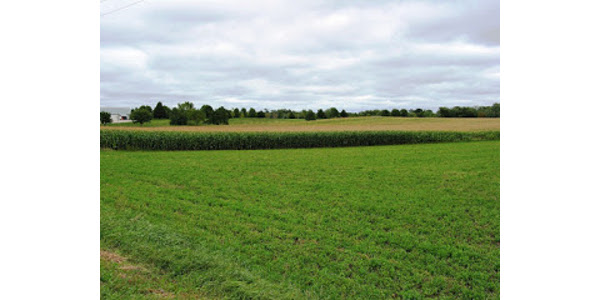 Crop rotation is the foundation for consistently producing high crop yields with efficient use of inputs. (Courtesy of University of Minnesota Extension)