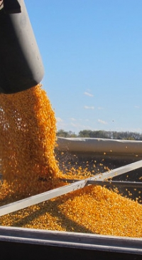 Marketing opportunities for 2021 and 2022 crops
