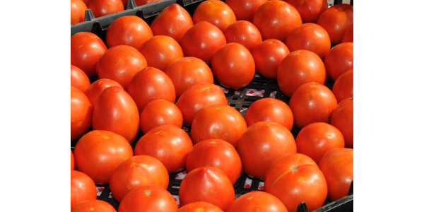K-State Research and Extension and the Kansas Department of Agriculture are offering workshops on food safety practices and regulations for produce growers throughout the state. (Courtesy of K-State Research and Extension)