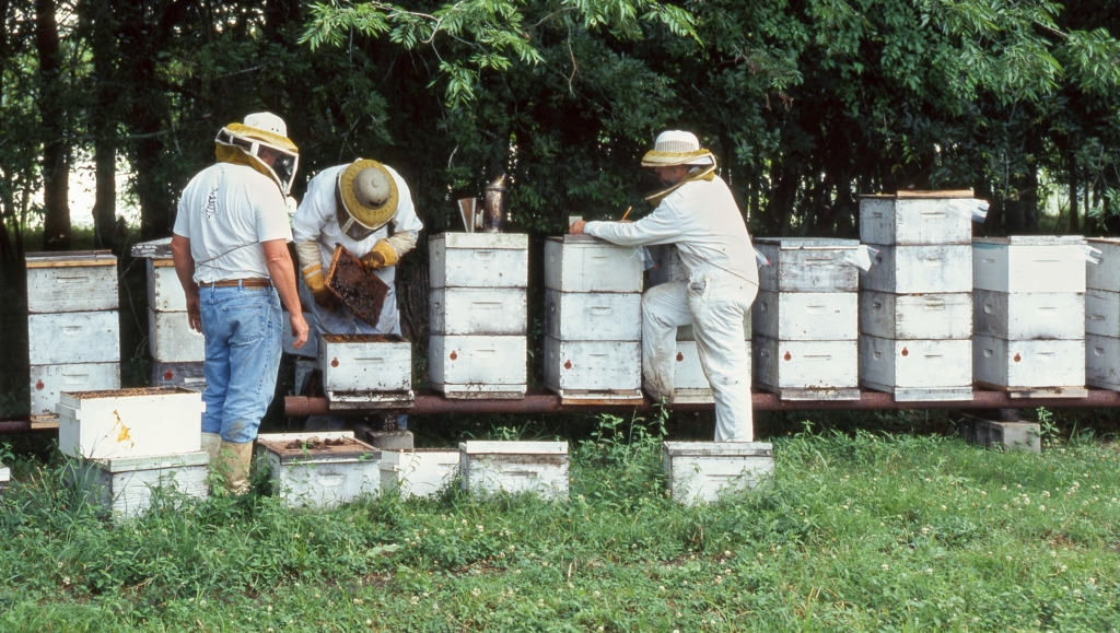 Bees colonies fail from cold during shipping