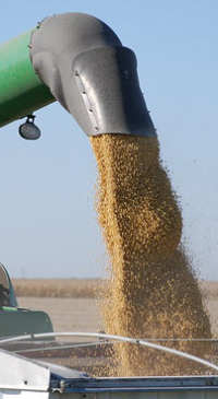 Nominations open for WI Soybean Board