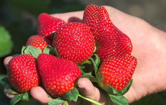 strawberry strawberries berry fruit (John, Flickr/Creative Commmons)
