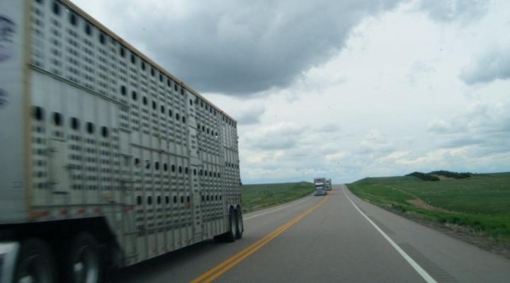 cattle trailer hauler livestock (Bradley Gordon, Flickr/Creative Commons)