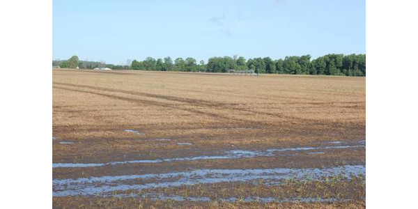 Irrigated field with standing water in Cass County. Note the wheel tracks from burndown application, indicating this is not a new situation this spring. (Photo by Bruce MacKellar, MSU Extension)