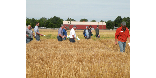 Barley field day participants tour barley variety trial plots. (Photo by Dean Bass, MSU Extension)