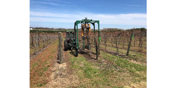 "Photo 1. Concord ""Vineyard of the Future"" at the Southwest Michigan Horticulture Research and Extension Center with 7-foot trellis and tractor-mounted mechanical pruner. (Photo by Thomas Todaro, MSU Extension)"