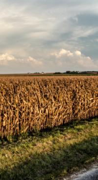 Mexican tariffs pose threat for Texas corn farmers