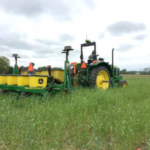 Interseeding soybean into standing cereal rye cover crops. (Photo by Erin Hill, MSU Department of Plant, Soil and Microbial Sciences)