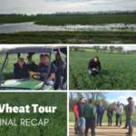 The 2019 Wheat Quality Council's Hard Winter Wheat Tour across Kansas wrapped up on May 2. (Courtesy of Kansas Wheat)