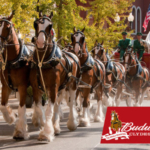 The world-famous Budweiser Clydesdales, the symbol of quality and tradition for Anheuser-Busch since 1933, are scheduled to appear at the Missouri State Fair, Aug 8-18. (Courtesy of Missouri State Fair)
