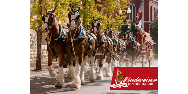 Nys Fair Horse Show 2020.Budweiser Clydesdales Return To State Fair Morning Ag Clips