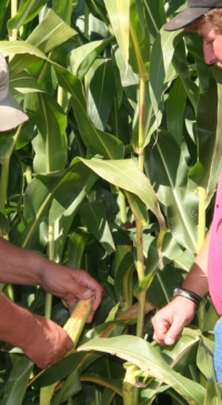 Research helps farmers select corn for local conditions