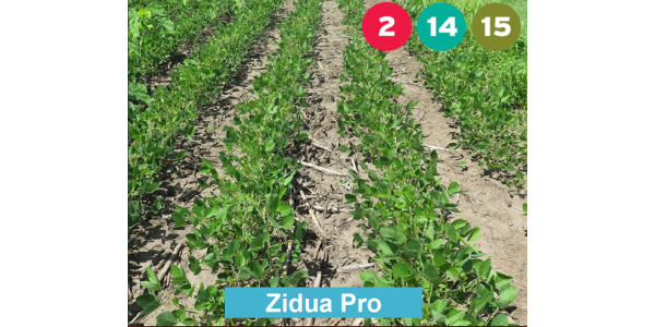 Zidua Pro provided excellent weed control. (Courtesy of University of Minnesota Extension)