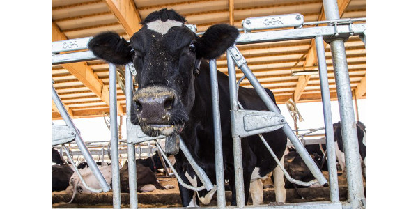 USDA's Farm Service Agency (FSA) announced the signup period for the new Dairy Margin Coverage(DMC) program will open June 17, 2019. (Courtesy of UW-Extension)