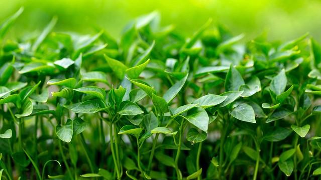 Rain leaves veggie farmers struggling