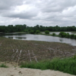 A CREP-eligible field with flooding along a ditch, resulting in loss of crops, nutrients and income. (Courtesy of WDATCP)