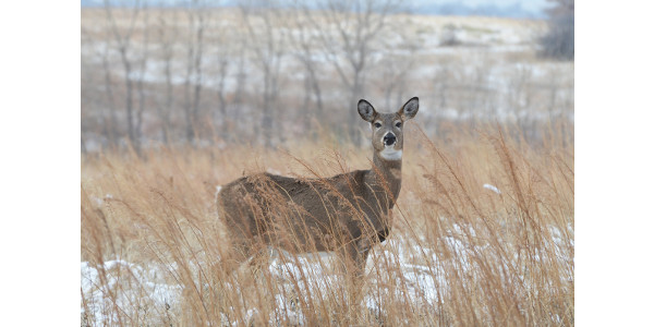 CPW ask hunters, landowners to weigh-in on the 2020-24 big game season structure for the eastern plains. (Courtesy of CPW)