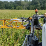 Using a converted sprayer to broadcast seed cover crops between corn. (Photo by Marc Hasenick)