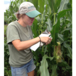 When planning tissue sampling, there are a few factors you should consider to get the most out of the information you receive. (Courtesy of University of Minnesota Extension)