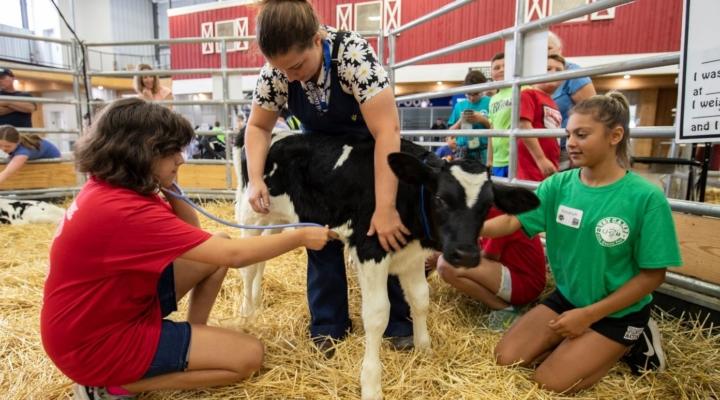 Erie County Fair's popular Vet Camp returns | Morning Ag Clips
