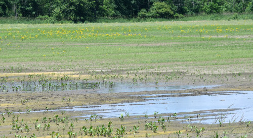 USDA designates two Ohio counties as primary natural disaster areas