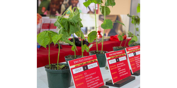 Farmers will get a timely update on the ongoing fight against herbicide resistance and weed control during Iowa State University Extension and Outreach's Herbicide Research and Demonstration Program Field Day June 27. (Courtesy of ISU Extension and Outreach)