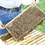 The Iowa Honey Producers Association will hold its summer field day at the Iowa State University Horticulture Research Station June 15.(Courtesy of ISU Extension and Outreach)