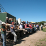 Visitors take part in the Carrington Research Extension Center's 2018 beef production tour. (NDSU photo)