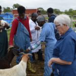 NCTA veterinary technology professor Judy Bowmaster-Cole instructed students on how to administer vaccinations for goats as members of the Nebraska Coordinating Commission on Postsecondary Education observed the class. (Crawford/NCTA News)