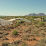 Researchers simulated low and high precipitation at sites in three states, including at the Jornada Basin Long-Term Ecological Research site in southern New Mexico. (Photo courtesy of Andre Franco/CSU)