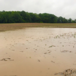 An unplanted Clinton County farm field after close to two inches of rain on August 20, 2019. (Courtesy of Michigan Farm Bureau)
