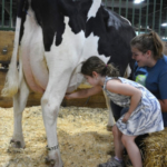 For the past 20 years, the Great Dairy Adventure has been a popular summer activity for local families and neighboring summer camps and daycares. (Courtesy of Michigan State DNR)