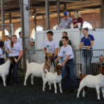 Important deadlines for livestock and competitive exhibit contests are approaching for the 2019 Missouri State Fair, which starts in just 48 days. (Courtesy of Missouri Department of Agriculture)