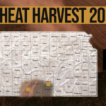This is day 1 of the Kansas Wheat Harvest Reports, brought to you by the Kansas Wheat Commission, Kansas Association of Wheat Growers and the Kansas Grain and Feed Association. (Courtesy of Kansas Wheat)