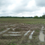 Saturated field in southwest Michigan on June 5, 2019. (Photo by Bruce Mackellar, MSU Extension)