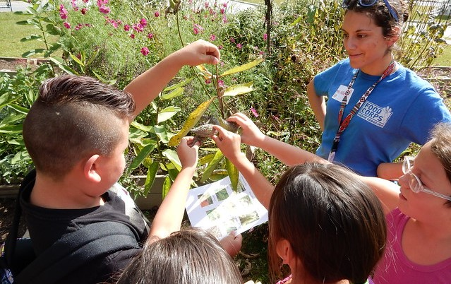 Record-breaking funding for Farm to School Grants