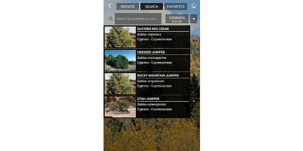 CO Woody Plants, developed by CSU faculty and Extension specialists, allows users to help identify trees, shrubs, and woody plants. (Courtesy of CSU)