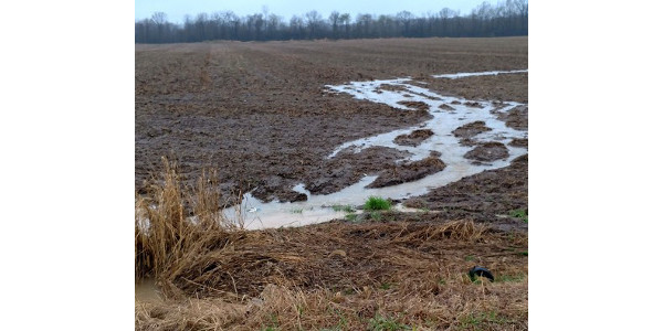Water runoff in delayed planted field. (Photo by Paul Gross, MSU Extension)