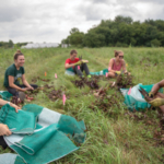 Solveig Hanson, far left, a graduate research assistant with the Department of Horticulture, trims and bags beets with undergraduates after harvesting at Tipi Produce in Evansville, Wis. (Courtesy of UW-Madison)