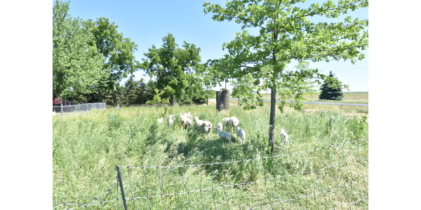 Bruce Carney plants trees in his pastures to provide shade for livestock, but also to grow fruits and nuts as an extra farm enterprise that supports the family's next generation of farmers. (Courtesy of Practical Farmers of Iowa)