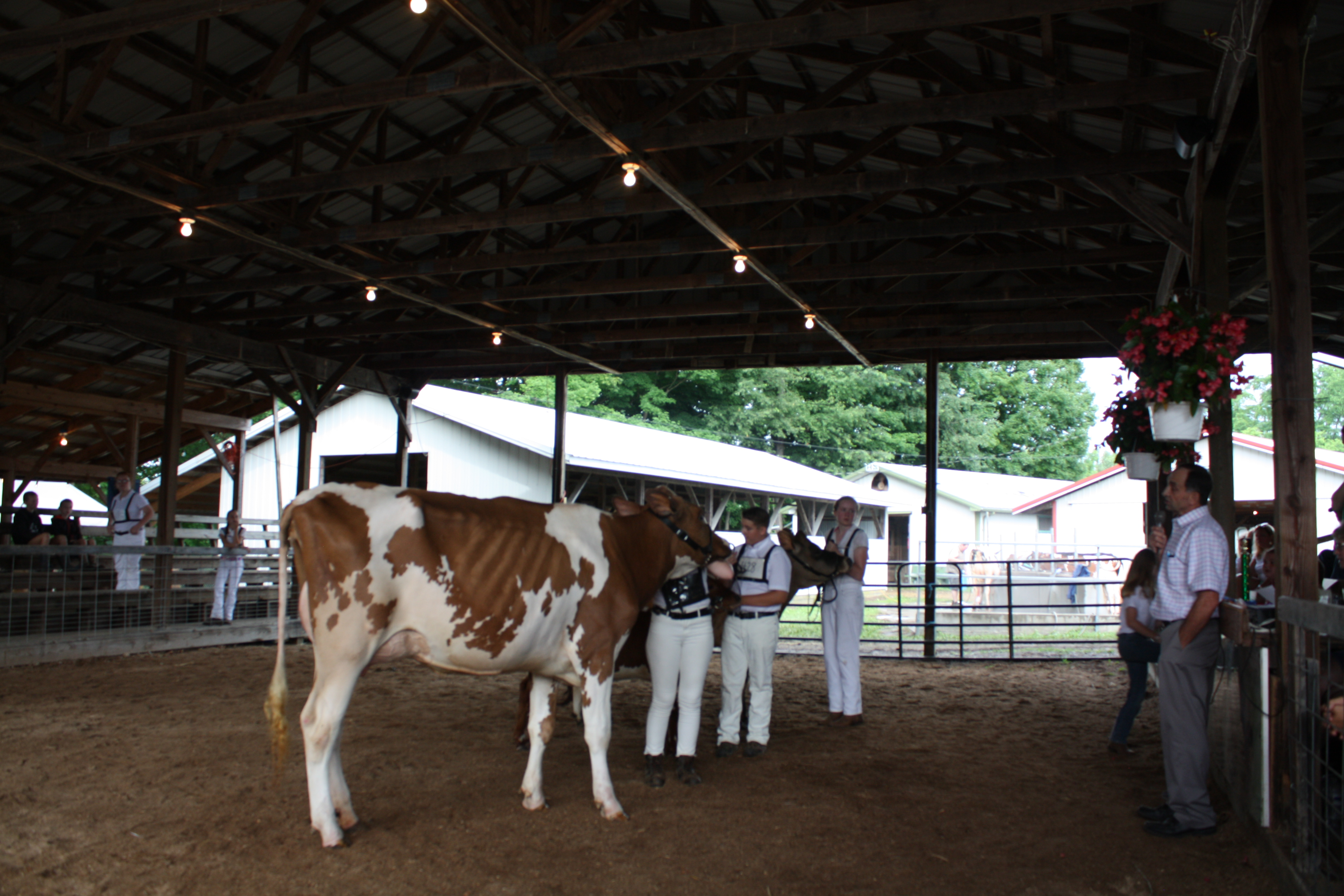 2019 Allegany County Fair Youth Dairy Show results | Morning