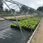Michigan State University Extension will be hosting a Summer Nursery Production Tour on Aug. 7, 2019. (Photo by Heidi Lindberg, MSU Extension)