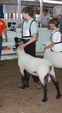 Results from the Allegany Co. Fair Youth Sheep Show